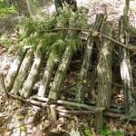 シイタケのホダ木