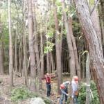 伐倒の方向を決める